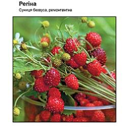zemlyanika-regina_-175x133-25z84