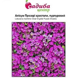 alisum-prozori-kristali-purpurovij