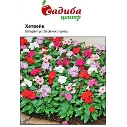Цветы_Hem Genetix_(175x133-35z84)