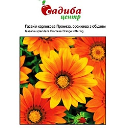 gazaniya-promeza-oranzheva-z-obidkom