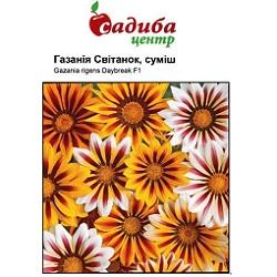 gazaniya-svitanok-sumish