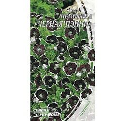 nemofila-chernaya-penni