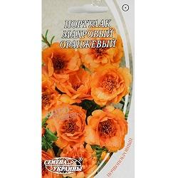 portulak-mahrovyj-oranzhevyj