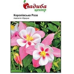 akvilegiya-korolivka-roza
