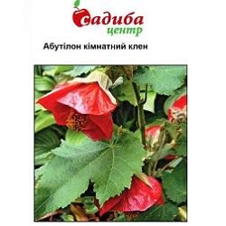 Kimnatniy Klen Abutilon_(175x133-25z84)